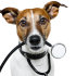 dog as a nurse with stethoscope